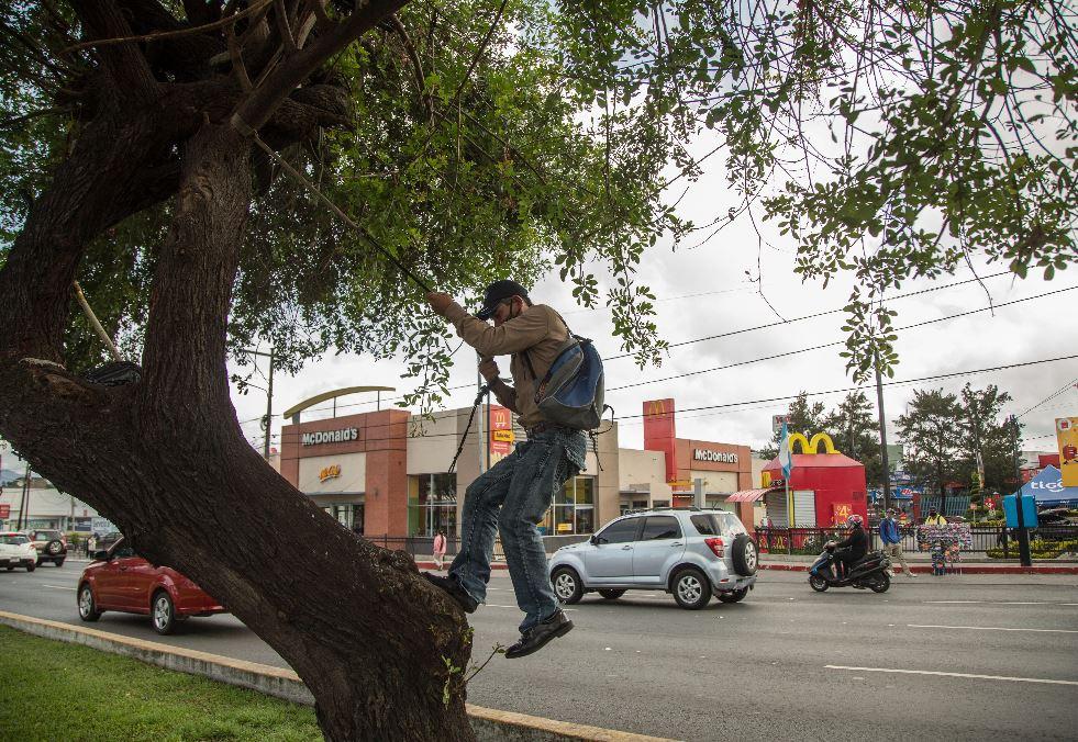 La esperanza del salvadoreño que vive en un árbol en la Ciudad de Guatemala